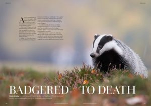 Badgered to Death front cover