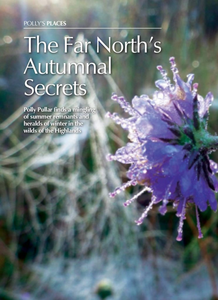 NORTH'S AUTUMNAL SECRETS cover