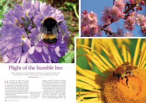 Plight of the Humble Bee  cover