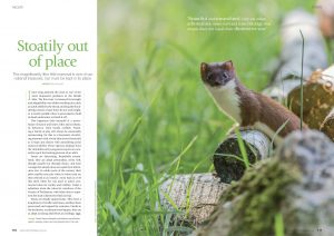 Stoatily Out of Place