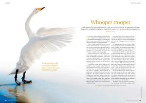 Whooper Trooper cover